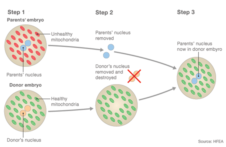 The process for creating a three parent embryo. Source: Human Fertilisation and Embryology Authority
